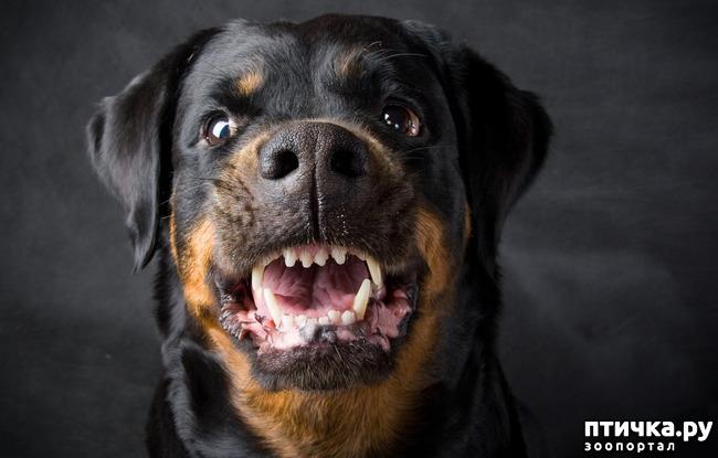 фото 2: Отчего кусают собаки? И как этого по возможности избежать.