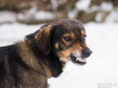 фото 3: Отчего кусают собаки? И как этого по возможности избежать.