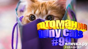 фото: Смешные коты | Приколы с котами | Видео про котов | Котомания #99