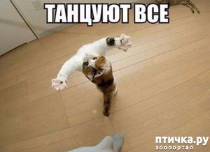 фото: Самые лучшие учителя танцев