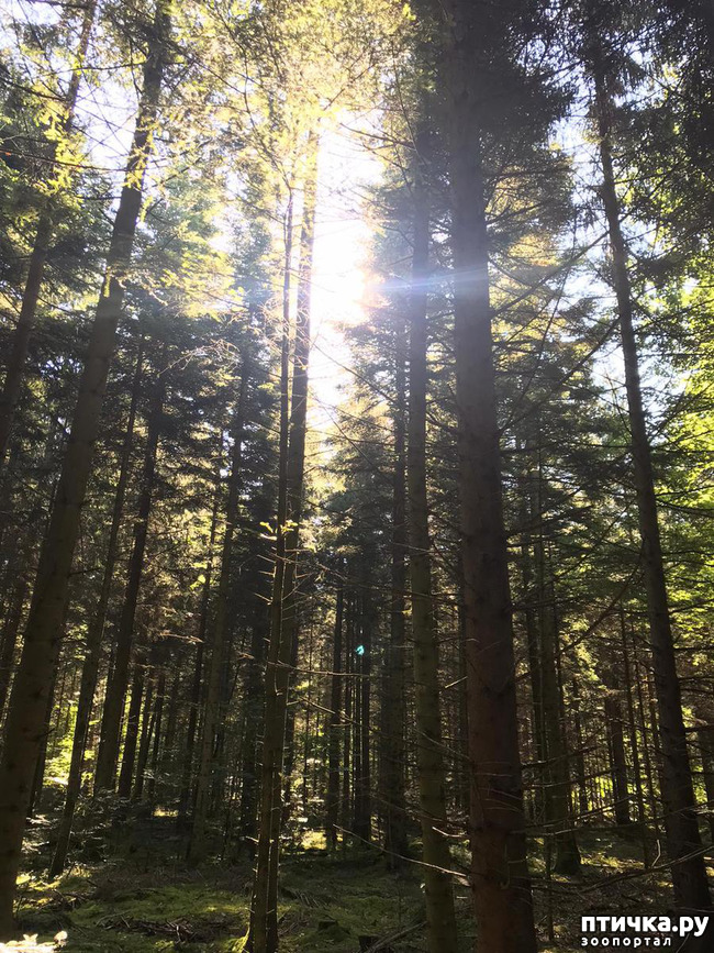 фото 4: Прогулка по лесу.