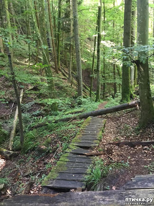 фото 6: Прогулка по лесу.