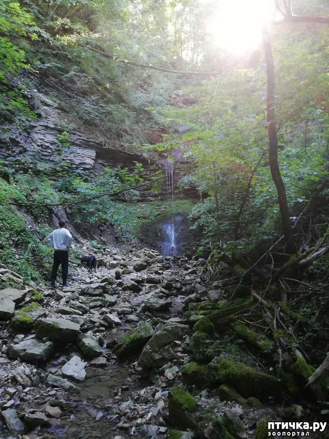 фото 9: Прогулка по лесу.