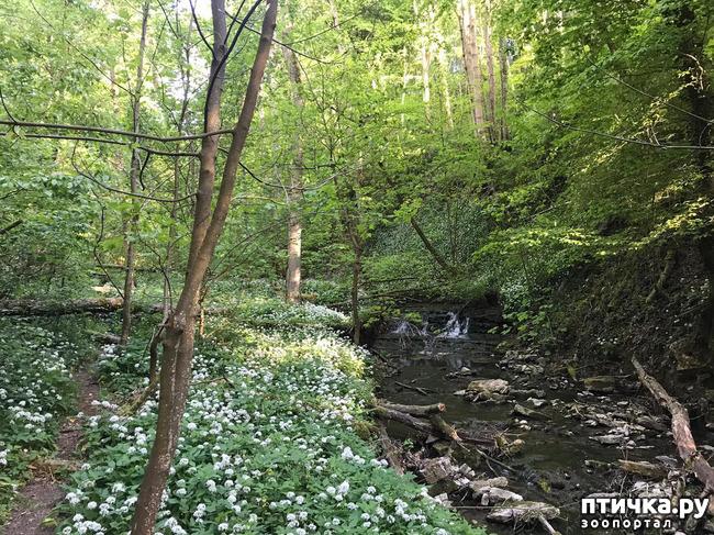 фото 14: Прогулка по лесу.