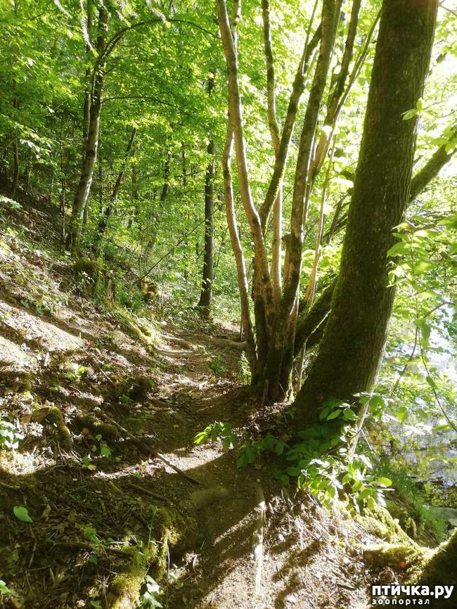 фото 15: Прогулка по лесу.