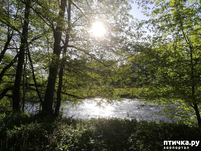 фото 18: Прогулка по лесу.