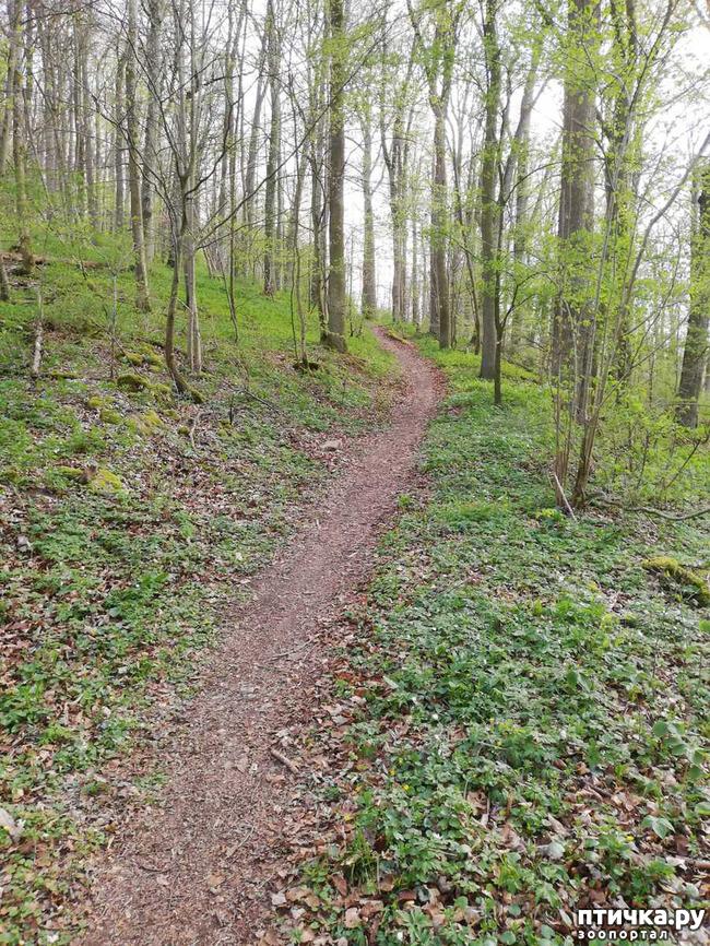 фото 20: Прогулка по лесу.