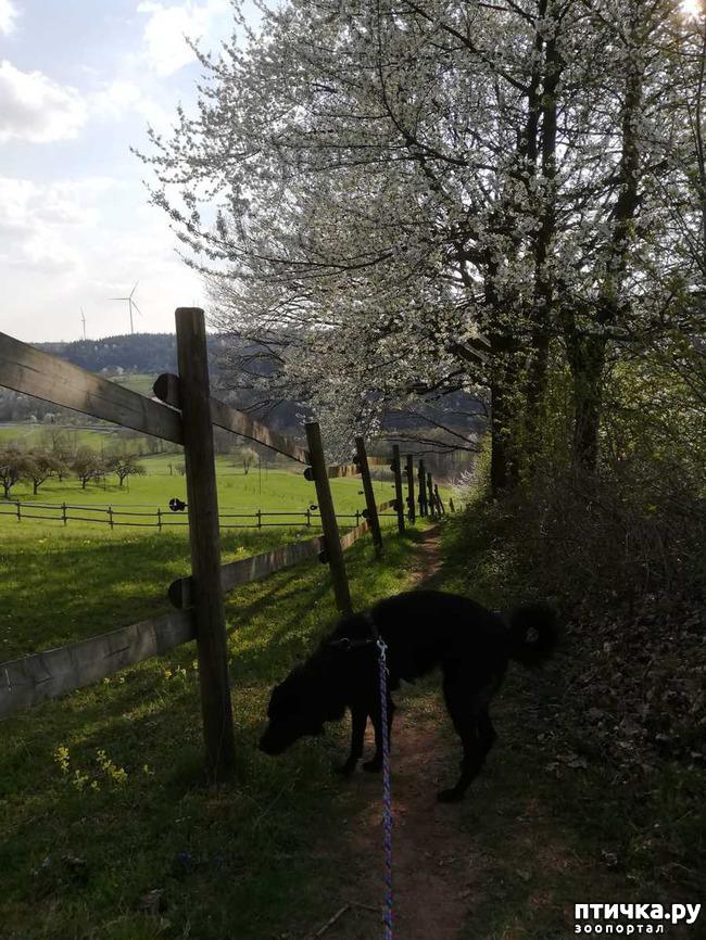 фото 24: Прогулка по лесу.