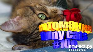 фото: Смешные коты   Приколы с котами   Видео про котов   Котомания #100