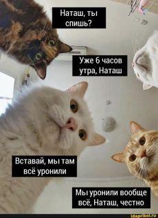 фото: Наташа и коты