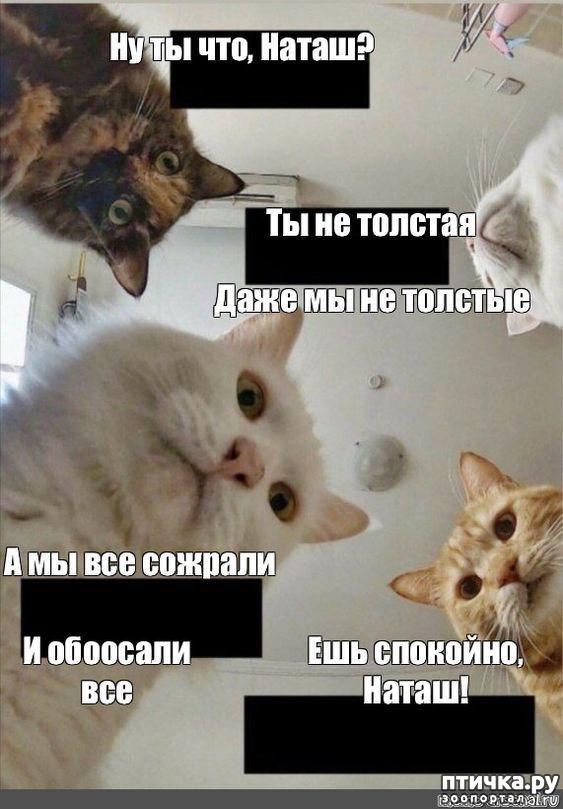 фото 2: Наташа и коты
