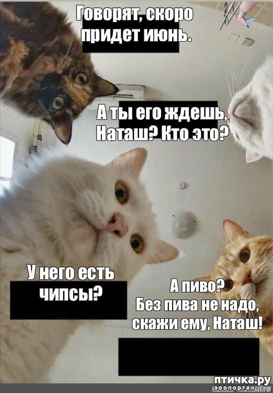фото 3: Наташа и коты