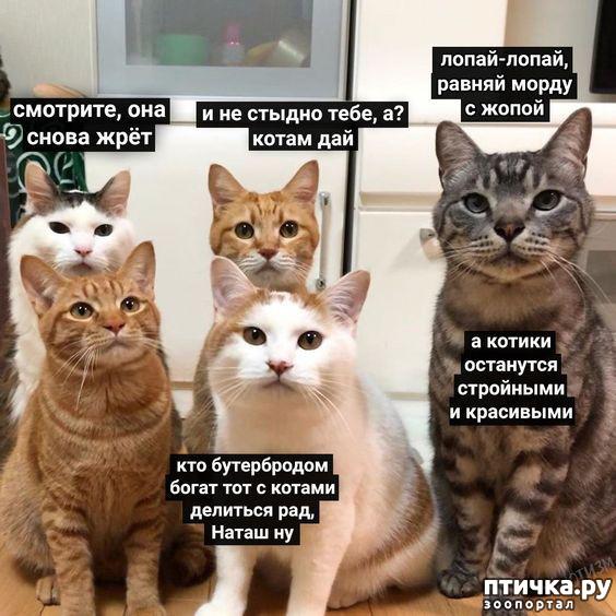фото 4: Наташа и коты