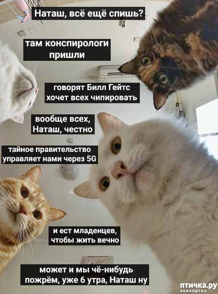 фото 7: Наташа и коты