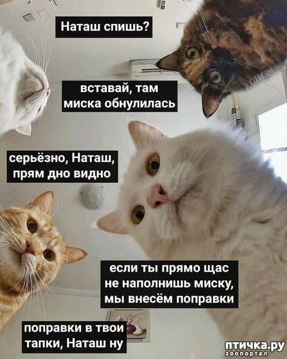 фото 8: Наташа и коты