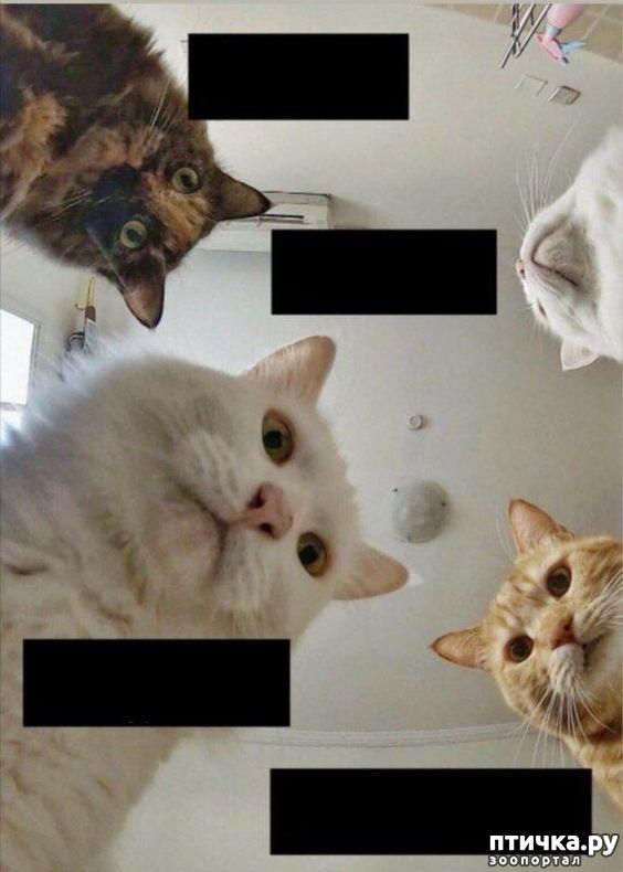 фото 9: Наташа и коты