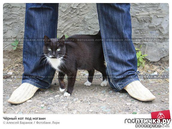 фото 7: Правила кошек
