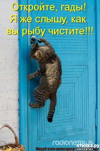 фото 2: Правила кошек