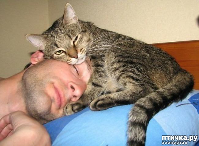 фото 8: Правила кошек