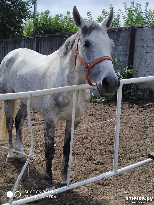фото 3: Как лошади влияют на здоровье человека.