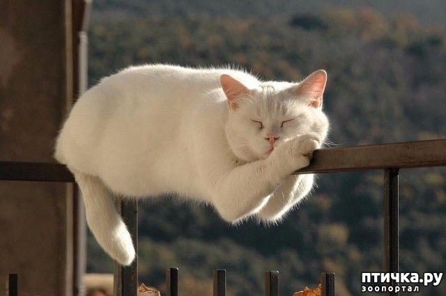 фото 1: Уснуть любой ценой