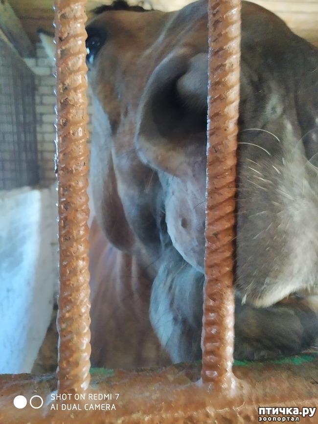 фото 5: Как лошади влияют на здоровье человека.