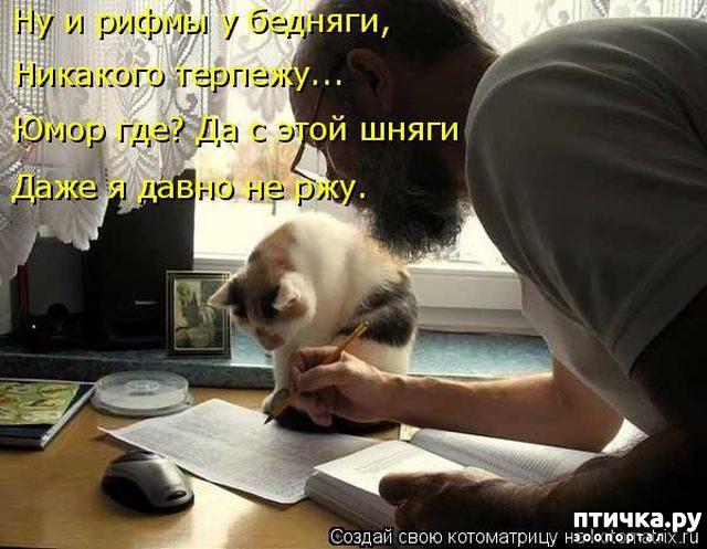 фото 4: Правила кошек