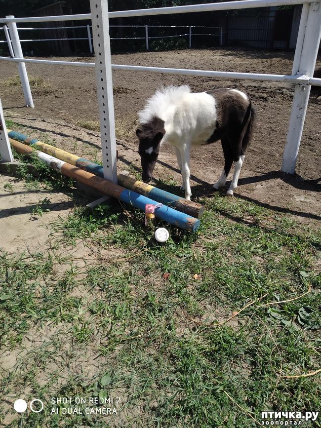 фото 6: Как лошади влияют на здоровье человека.