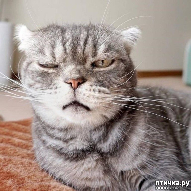 фото 1: Хотела спросить своего кота, где он шлялся неделю. По взгляду поняла - не стоит)