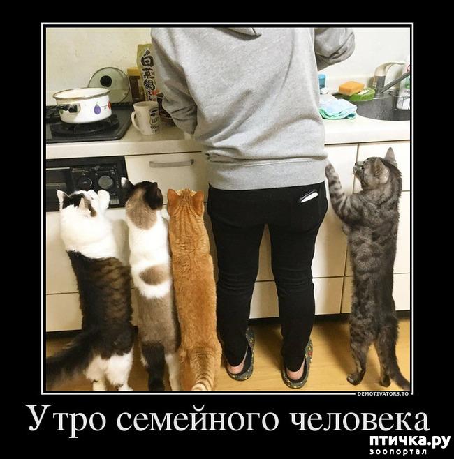 фото 3: Правила кошек