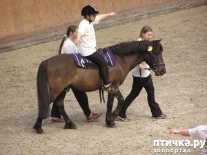 фото: Как лошади влияют на здоровье человека.