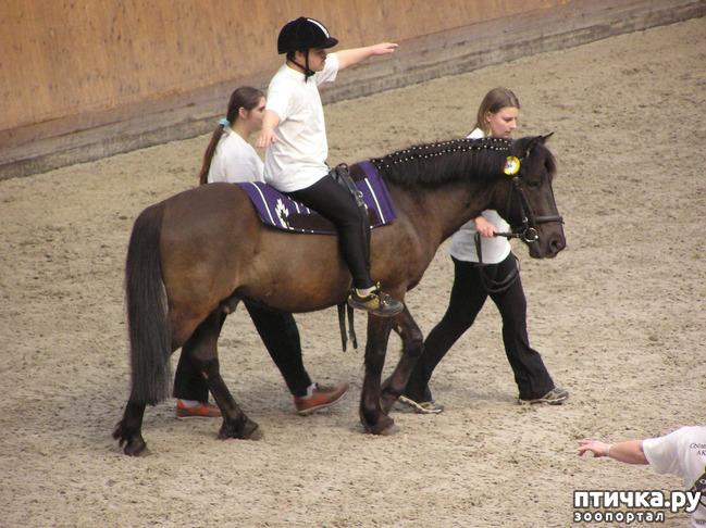 фото 1: Как лошади влияют на здоровье человека.