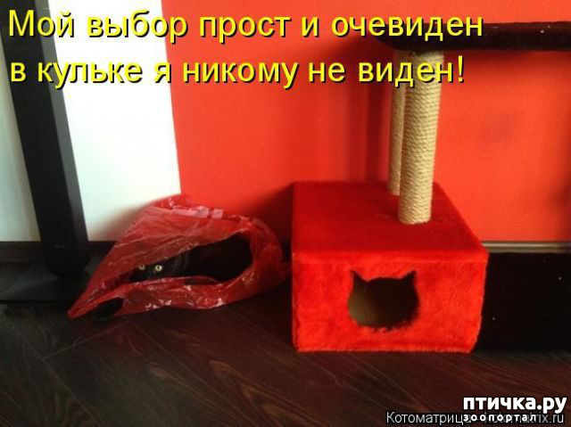 фото 9: Правила кошек