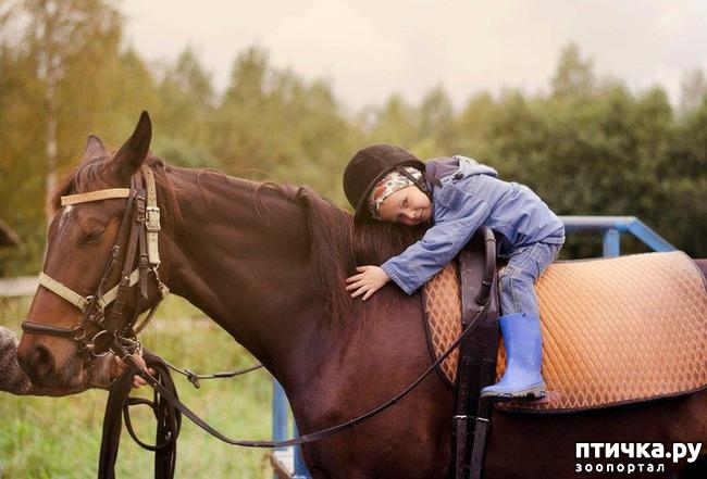 фото 2: Как лошади влияют на здоровье человека.