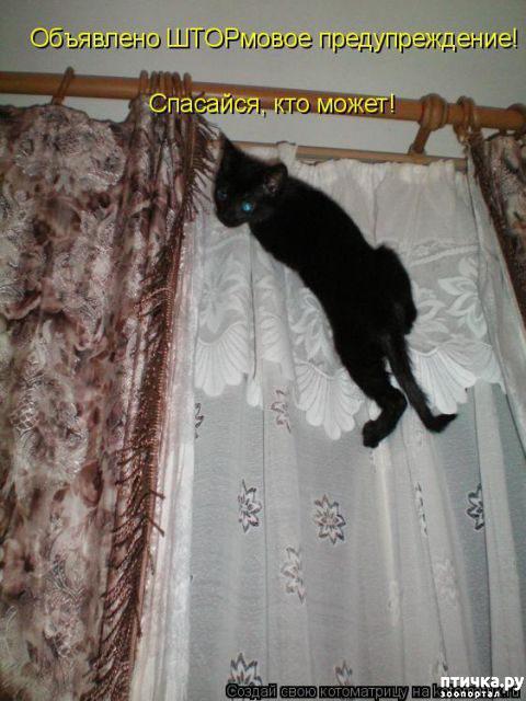фото 10: Правила кошек