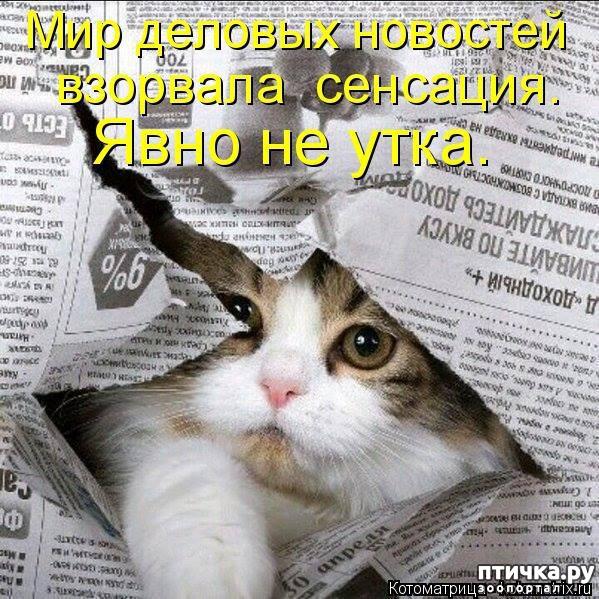 фото 5: Правила кошек