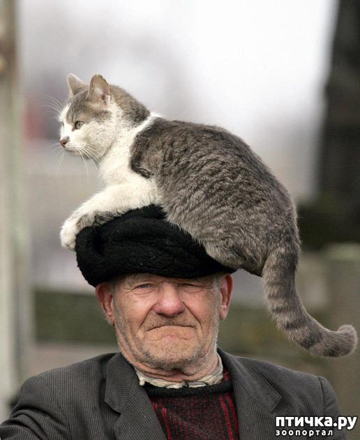 фото 11: Правила кошек