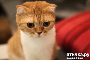 фото: Кошка на несколько дней. Она просто была, что-то тихо мурчала