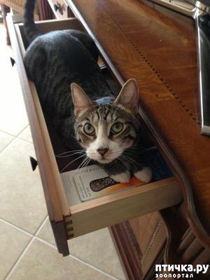 "фото: Котоматрица на тему: ""Кошка спряталась"""