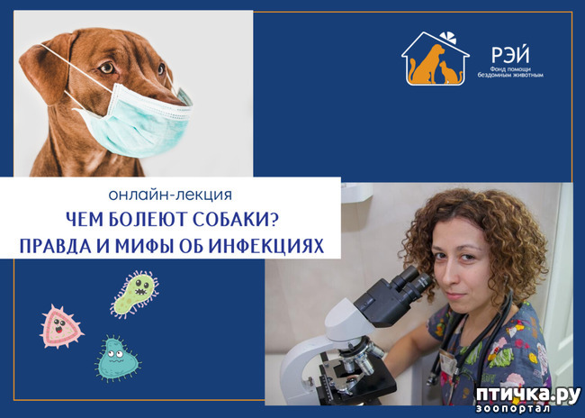 фото 1: Бесплатная онлайн-лекция о здоровье собак от фонда помощи животным