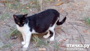 фото: Ася вывела котят