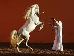 фото 9: Арабская лошадь - легендарная восточная красота