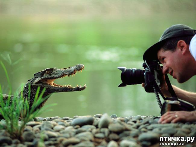 фото 1: Два фотографа! Совсем другое дело!