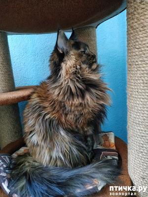 фото: 15 правил жизни настоящего кота