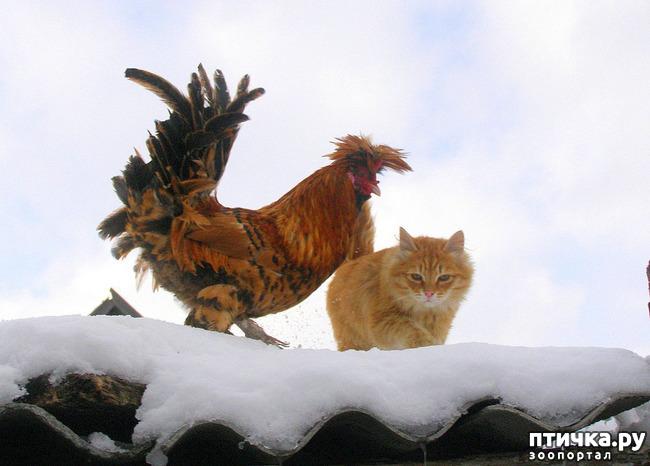 фото 1: Жили у бабуси Петя и котуся