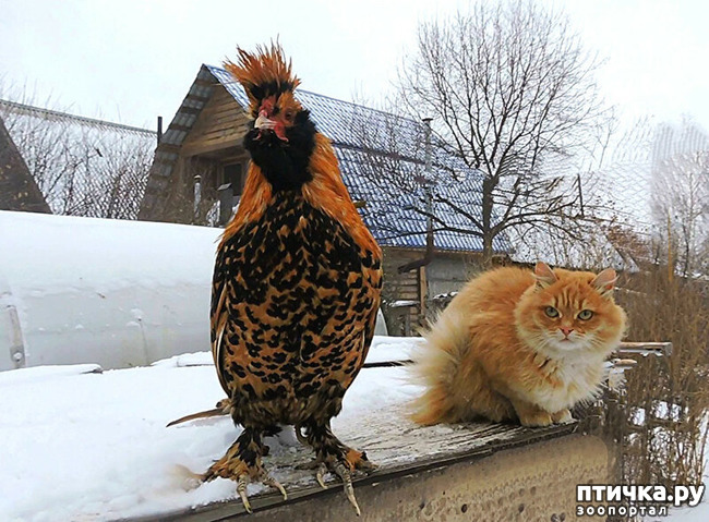 фото 2: Жили у бабуси Петя и котуся