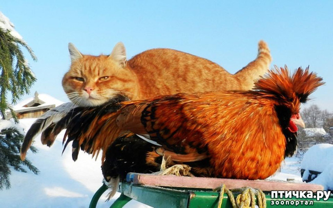 фото 4: Жили у бабуси Петя и котуся