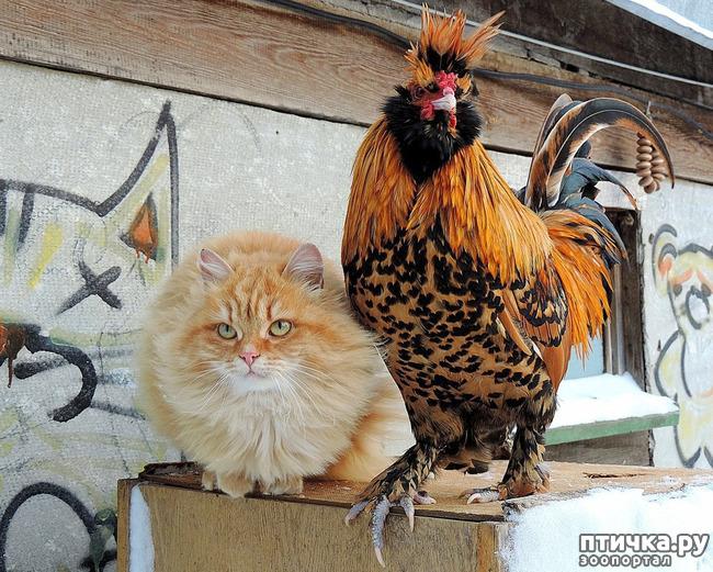 фото 5: Жили у бабуси Петя и котуся