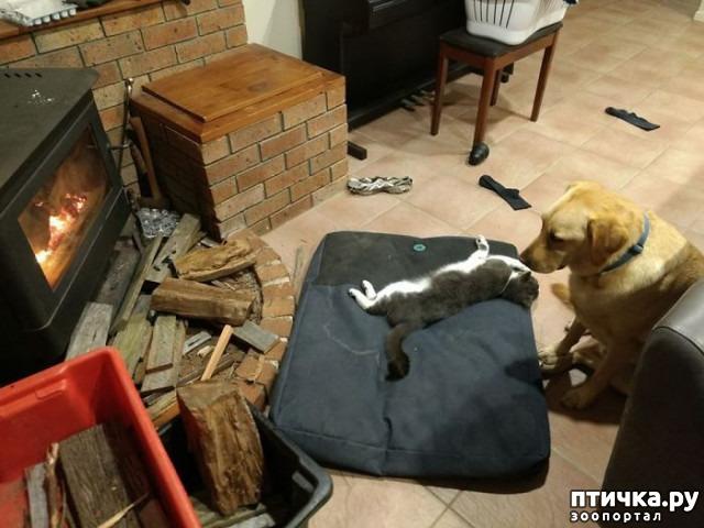 фото 14: Наглые мордашки, которые присвоили место собак