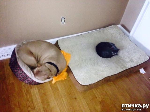 фото 17: Наглые мордашки, которые присвоили место собак